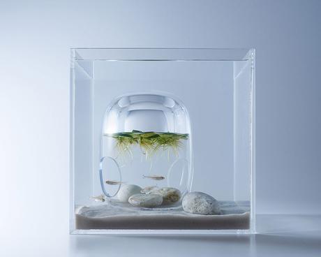 aquarium-design-waterscape-hakura-misawa-artiste-japon