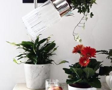 Comment purifier une maison avec des plantes ?