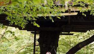 Week insolite dans cabanes Bois Landry avec Palmer's