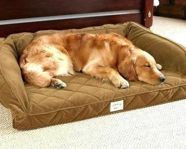 Sams Club Dog Bed